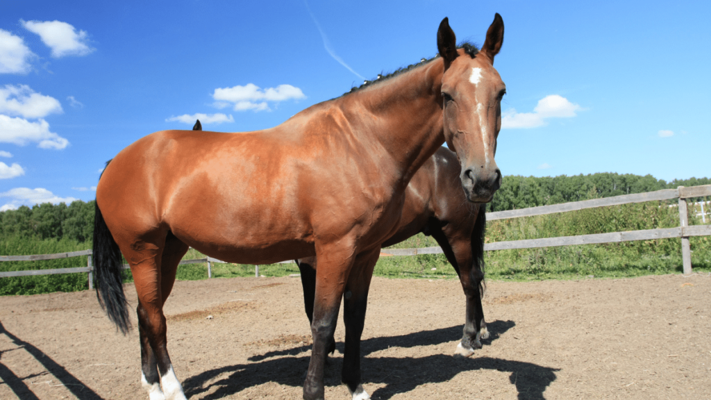 Top 10 Largest Horse Breeds Animals Cell